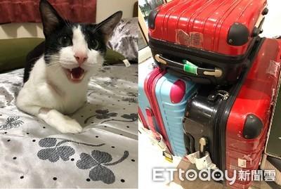 行李沾滿「氣味禮物」險滯留異鄉