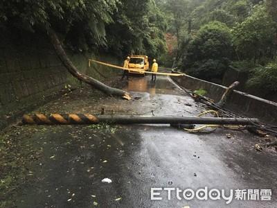 雙北降豪大雨 土城道路樹木、電桿全倒