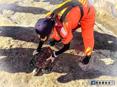 海龜胃塞滿塑膠袋 海巡署長:誰害死牠