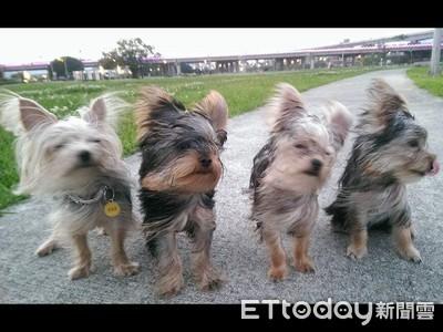 散步遇強風!狗界F4「瞇眼走秀」