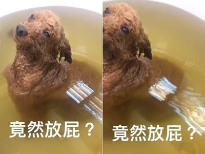 炸雞狗泡澡太舒服「浴缸裡放屁」