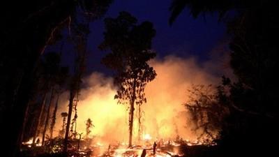 貿易戰也是幫兇!「亞馬遜森林大火」頻發竟是大豆不夠賣中國