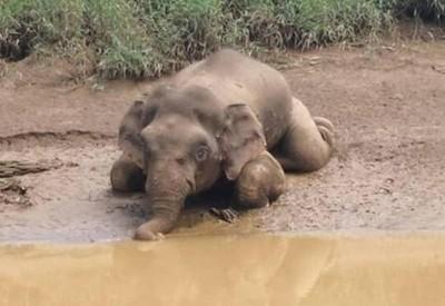 「小象」象牙被盜 中70槍慘死