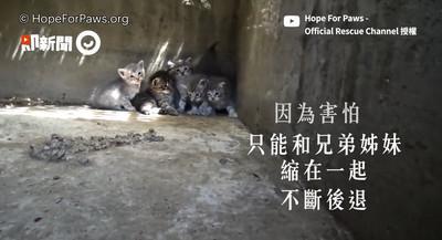 奶貓困排水溝 救援隊爬人孔蓋救援