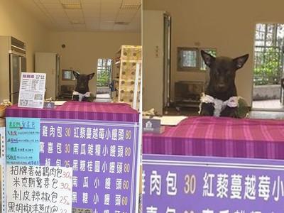 米克斯犬公然賣「米克斯驚喜包」