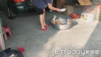 3奶貓衝大鐵盆 原來是阿嬤奇葩餵食秀