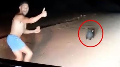 拿尖石塊砸死袋熊!惡劣男奔跑追殺還比讚 身分曝光竟是警察