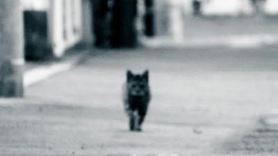 誤撞貓咪!「貓叫聲一路跟」 貨車司機承諾燒罐罐才被放行
