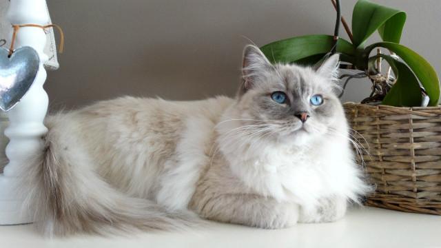 ▲貓咪,貓,喵星人,寵物,動物。(圖/取自免費圖庫Pixabay)