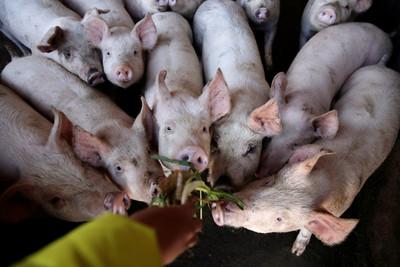 賣中國賺2倍 越南豬肉價格新高
