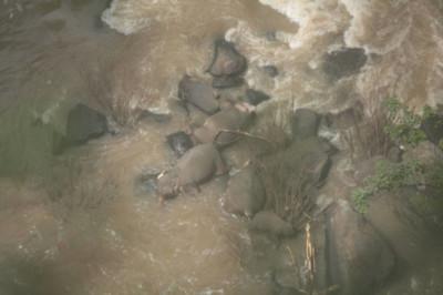 幼象跌進瀑布!5象跳下救援全摔死