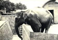 竹市動物園主題圖書館 年底即將開幕