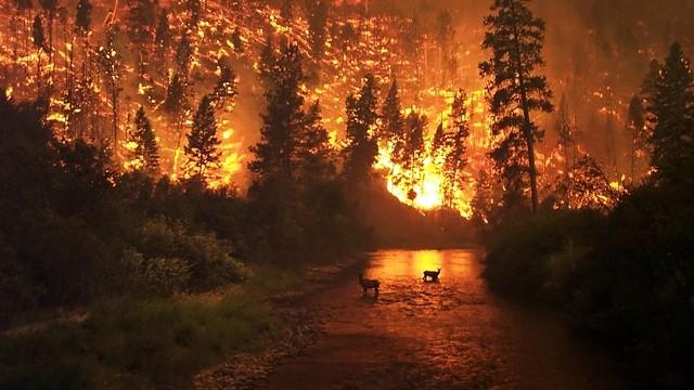 ▲▼森林大火。(圖/翻攝自維基百科)