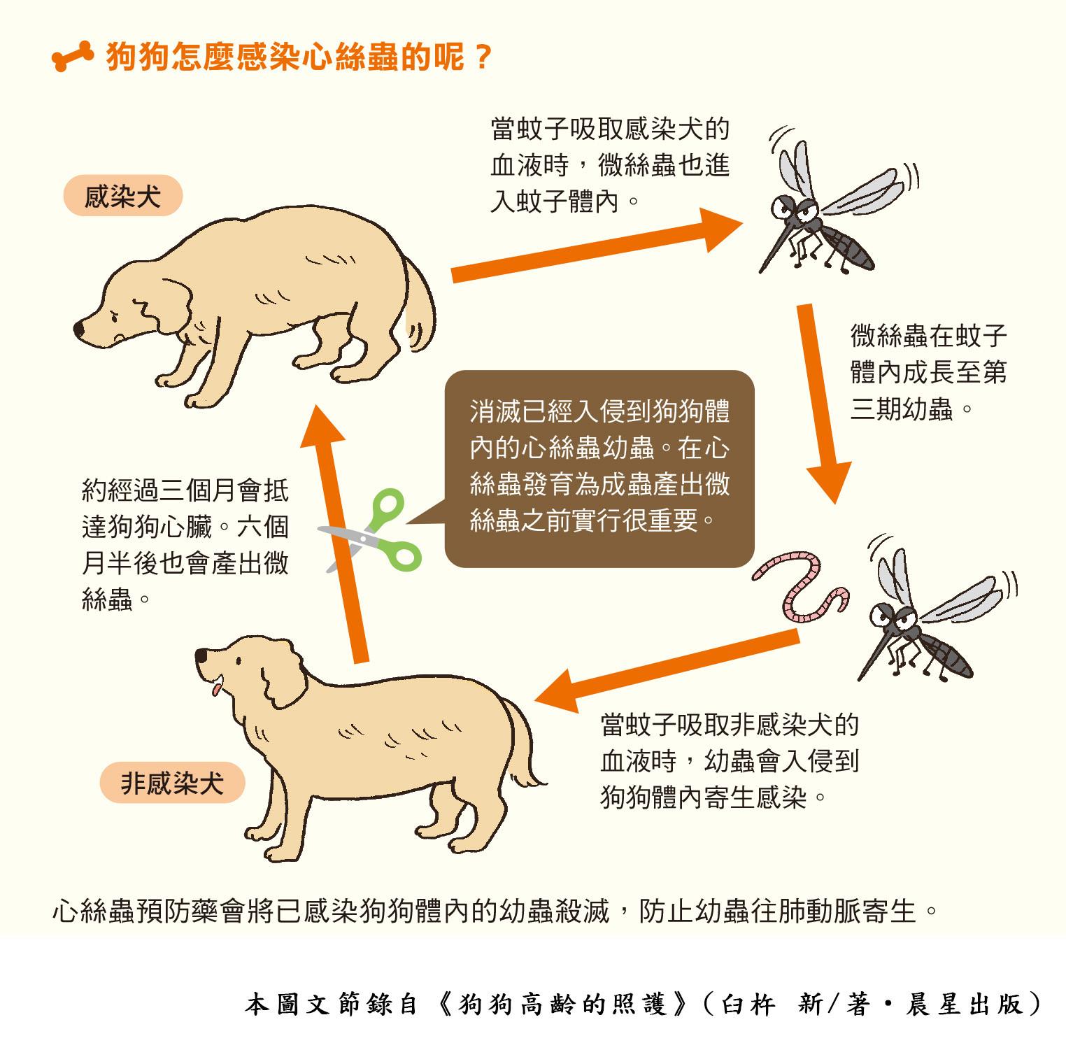 ▲▼書籍《狗狗高齡的照護》。(圖/晨星提供,請勿隨意翻拍,以免侵權。)