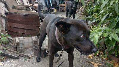 明明有志工每日送餐!老人過世多天才被發現 後院五隻黑狗差點陪葬