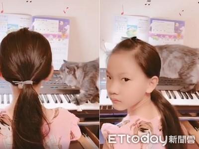 女兒初學鋼琴 喵教4腳聯彈被瞪