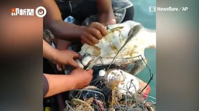海龜扛寶特瓶漂洋 遇上暖心漁夫