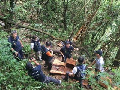 警破獲山老鼠集團 查出300kg牛樟木
