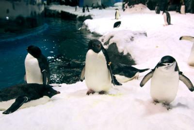 壽山動物園雙十免費看萌河馬寶寶