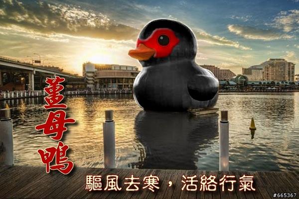 黃色小鴨,光榮碼頭,薑母鴨,紅面番鴨