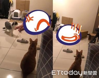 貓奴鑽箱想陪玩!2主子鄙視跑出