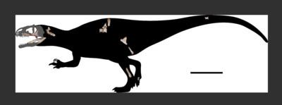 泰國發現白堊紀最大恐龍「鯊齒龍」