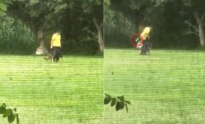 警犬暴力訓練!訓犬師認鞭打狠踹