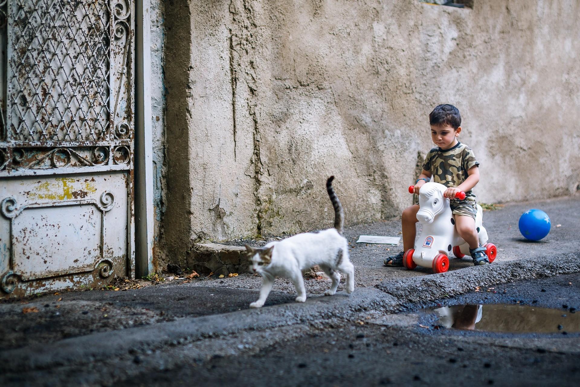 ▲貓,貓咪,喵星人,小孩,。(圖/取自免費圖庫Pixabay)