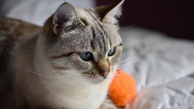 餵點心用針筒!讓貓咪「習慣注射器」 未來餵藥才不會怕