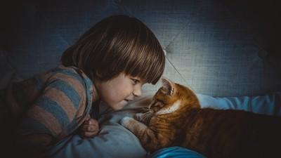 喵星人只愛女森? 吸貓前先掌握要點:放輕聲音很重要