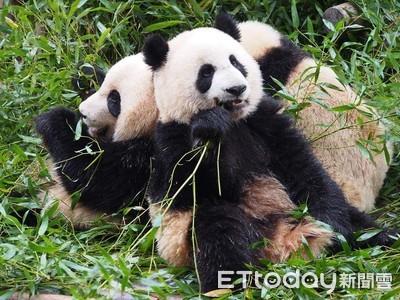 台灣「貓熊粉」為一張照片守8小時