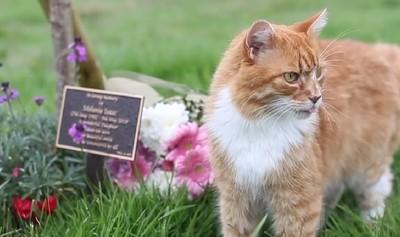 貓咪送葬師!牠靠第6感準時弔喪
