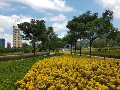 新北4座公園「彩色植栽」大換裝!