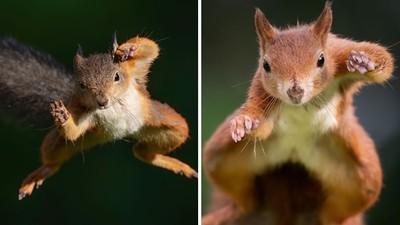 耗時一年和松鼠搏感情!攝影師成功拍到「飛天輕功」真實照片