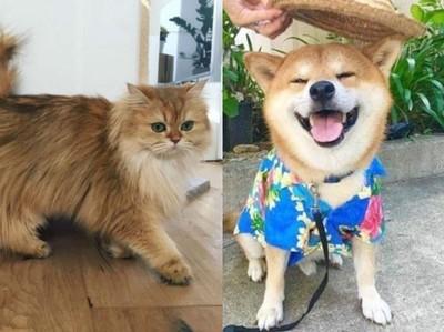 你像貓系還是犬系?