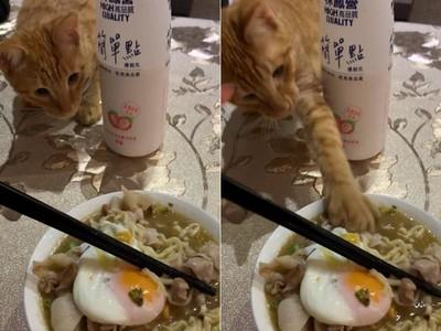 泡麵吃一半 喵手插進湯抓走肉片