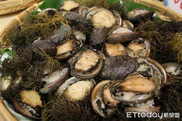 新北啟動九孔復育新樂章 海洋資源保育向下扎根 | ETtoday地方新聞