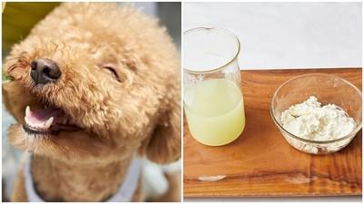 「茅屋起司」有調養癌症功效!寵物美食專家大推:作法超簡單