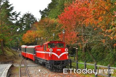 楓紅了!阿里山楓旅列車12月登場