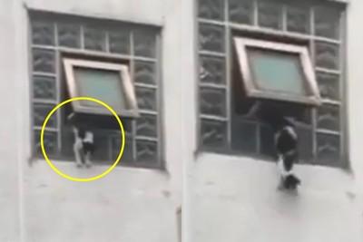 貓咪遭人從4樓窗口推下影片曝光