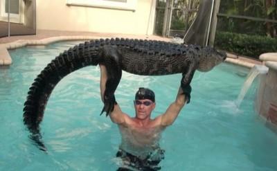 男捕捉3公尺長鱷魚 祕訣是陪牠玩