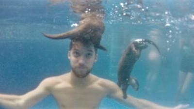 超夢幻泳池!與小爪水獺同游超銷魂