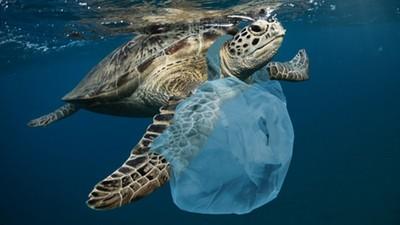塑膠袋發明者嘆「當初是為了救地球」!納悶人們為何用完就丟、還噎死鯨魚