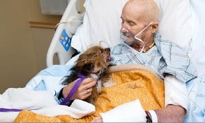 老翁臨終最後心願 見愛犬最後一面