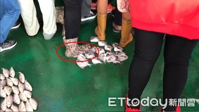 韓國瑜訪東石!韓粉踩上魚貨...他急吼:踩到了啦