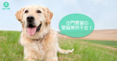 一點都不夢幻的可怕疾病:犬艾利希體症