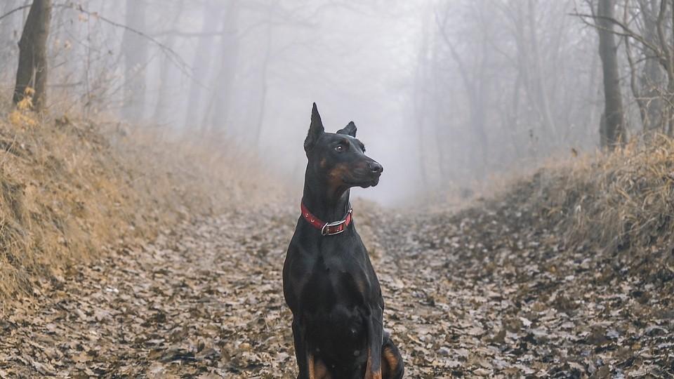 ▲▼黑狗,狗,狗狗。(圖/取自免費圖庫Pixabay)