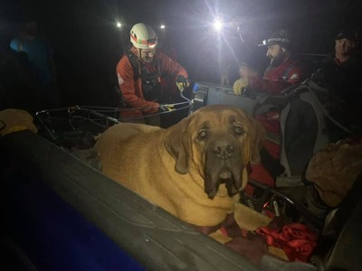90kg獒犬登山走不動 五星級待遇迎下山
