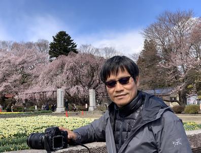 「櫻花戀」黃進龍紐約特展