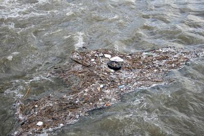 太平洋出現斑點 100萬隻海鳥餓死